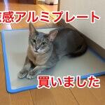猫の熱中症対策と涼感アルミプレートのレビュー