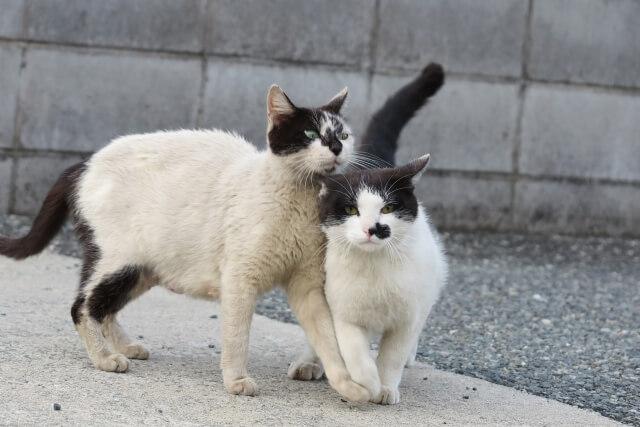 野良猫 ワクチン