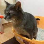 成功しやすい猫の採尿方法と紙コップひしゃくの作り方、採尿のコツなど